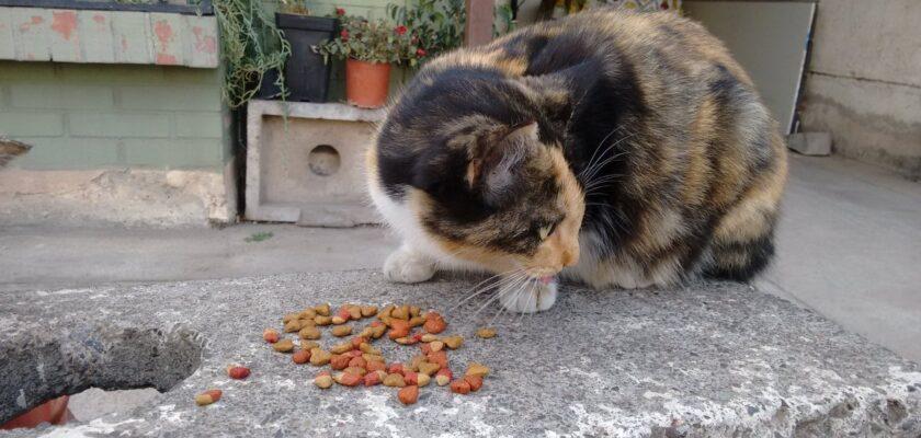 5 mitos de la comida para gatos