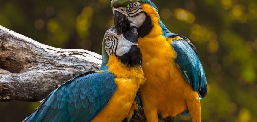 Dimorfismo sexual en animales, ¿qué es y cómo se manifiesta?