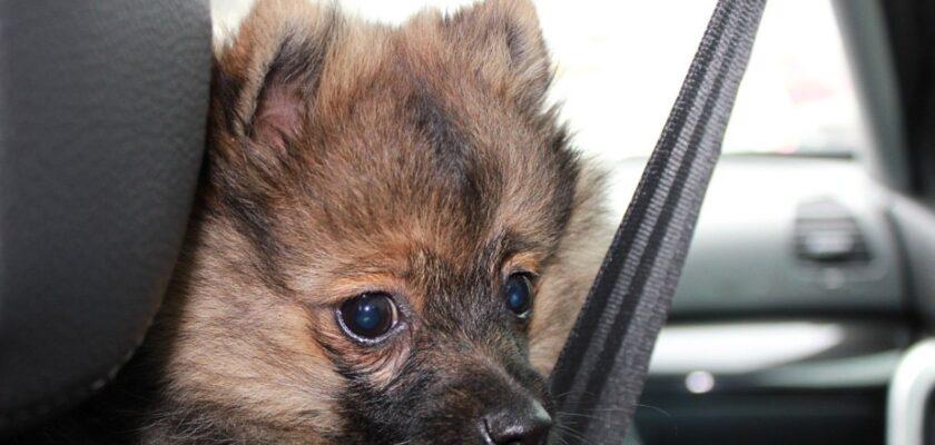 Los mejores consejos para viajar con el perro en coche este verano