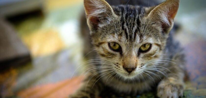 ¿Cómo evitar que mi gato esté triste? Los trucos para animarle