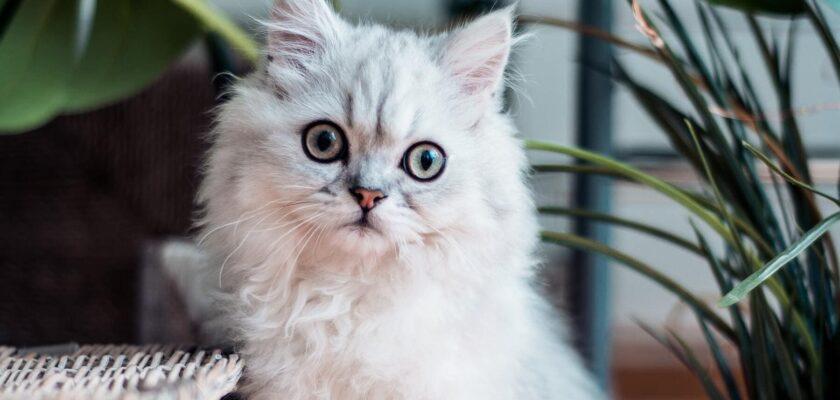 ¿Son más propensos a contraer el Covid-19 los perros o los gatos?