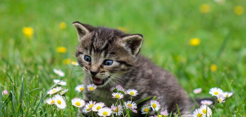 3 plantas que son tóxicas para los gatos
