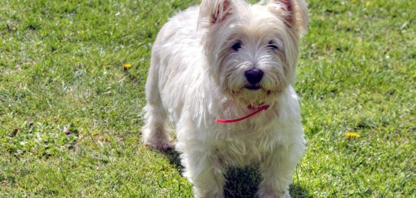 5 olores que los perros odian y que debemos evitar