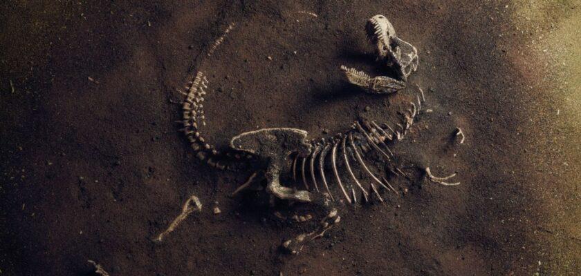 La historia del origen de los dinosaurios: los datos más curiosos